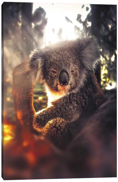 The Koala Canvas Art Print