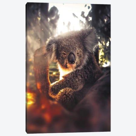 The Koala Canvas Print #ZGA106} by Zenja Gammer Canvas Print