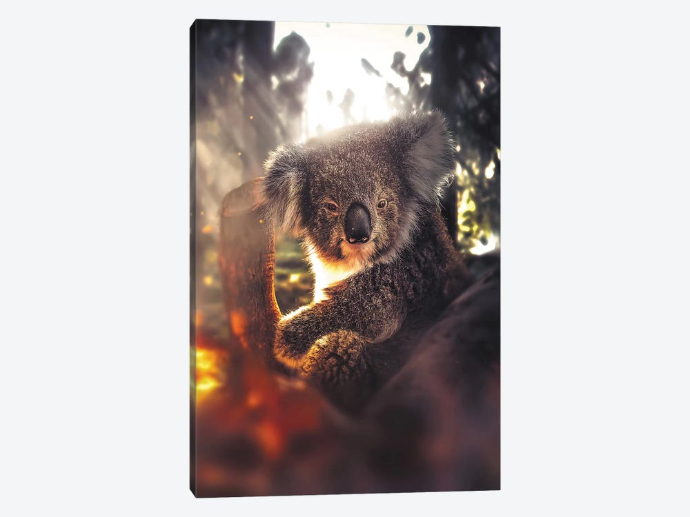 The Koala by Zenja Gammer 1-piece Canvas Artwork