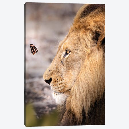 The Lion And The Butterfly Canvas Print #ZGA114} by Zenja Gammer Canvas Wall Art