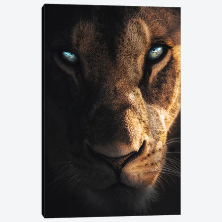 Eye Of The Lion Canvas Print #ZGA116} by Zenja Gammer Canvas Art