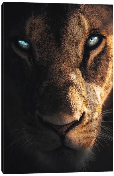 Eye Of The Lion Canvas Art Print