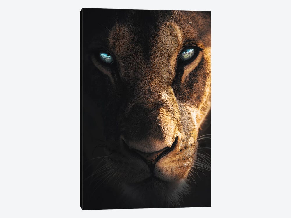 Eye Of The Lion by Zenja Gammer 1-piece Canvas Art Print