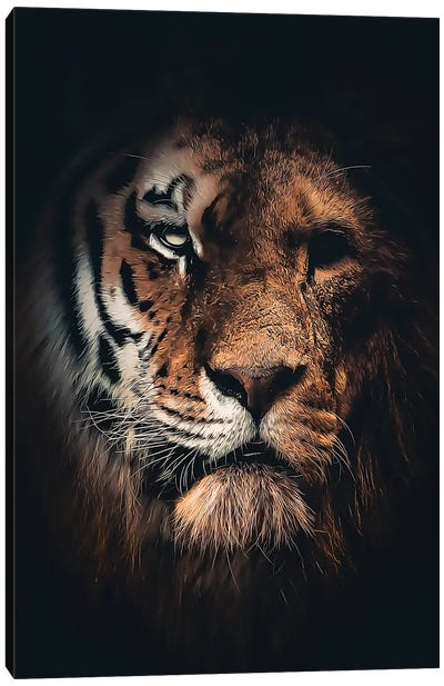 Half Tiger Half Lion Canvas Art Print