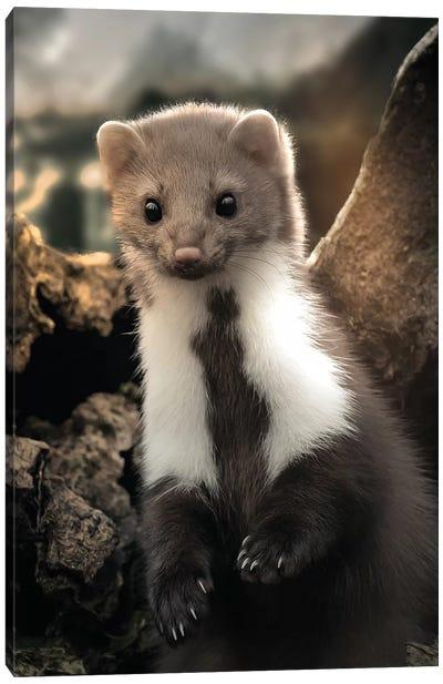The Cute Weasel Canvas Art Print
