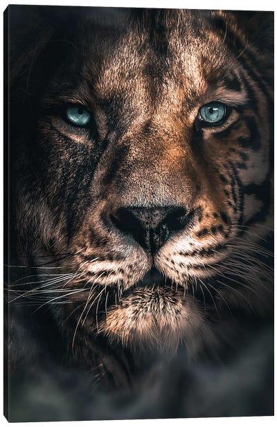 Half A Tiger Half A Lion Canvas Art Print