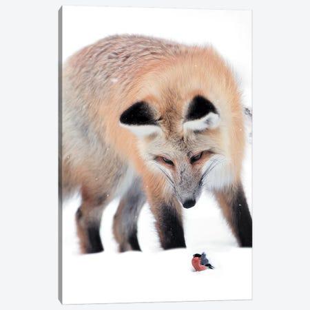 Fox Bird Canvas Print #ZGA15} by Zenja Gammer Canvas Wall Art