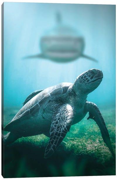 Turtle & Shark Canvas Art Print