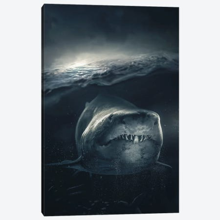 Underwater Shark Canvas Print #ZGA179} by Zenja Gammer Art Print
