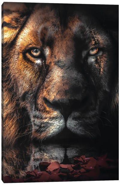 Lion Scar Canvas Art Print