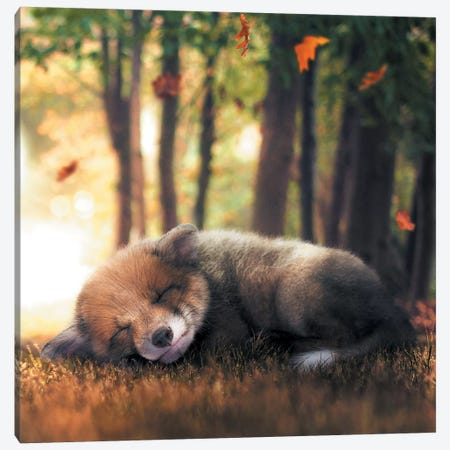 Fox Cub Sleeping Canvas Print #ZGA19} by Zenja Gammer Canvas Art Print