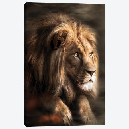 Lion Misty Canvas Print #ZGA202} by Zenja Gammer Canvas Print