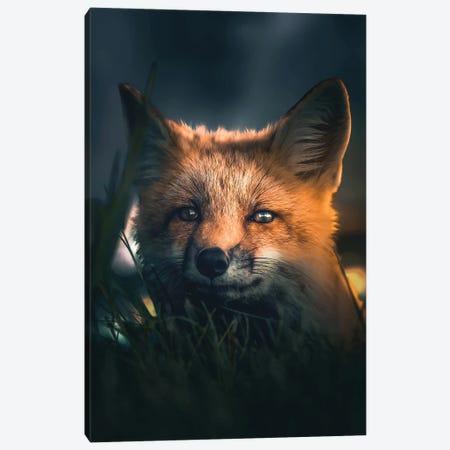 Urban Fox Canvas Print #ZGA209} by Zenja Gammer Art Print