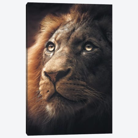 Lion Canvas Print #ZGA30} by Zenja Gammer Canvas Print