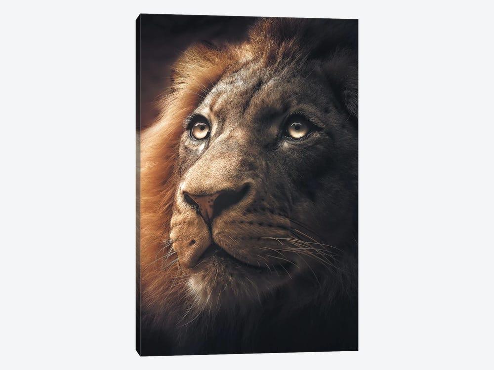 Lion by Zenja Gammer 1-piece Canvas Art