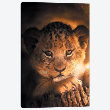 Lion Cub Canvas Print #ZGA34} by Zenja Gammer Canvas Wall Art