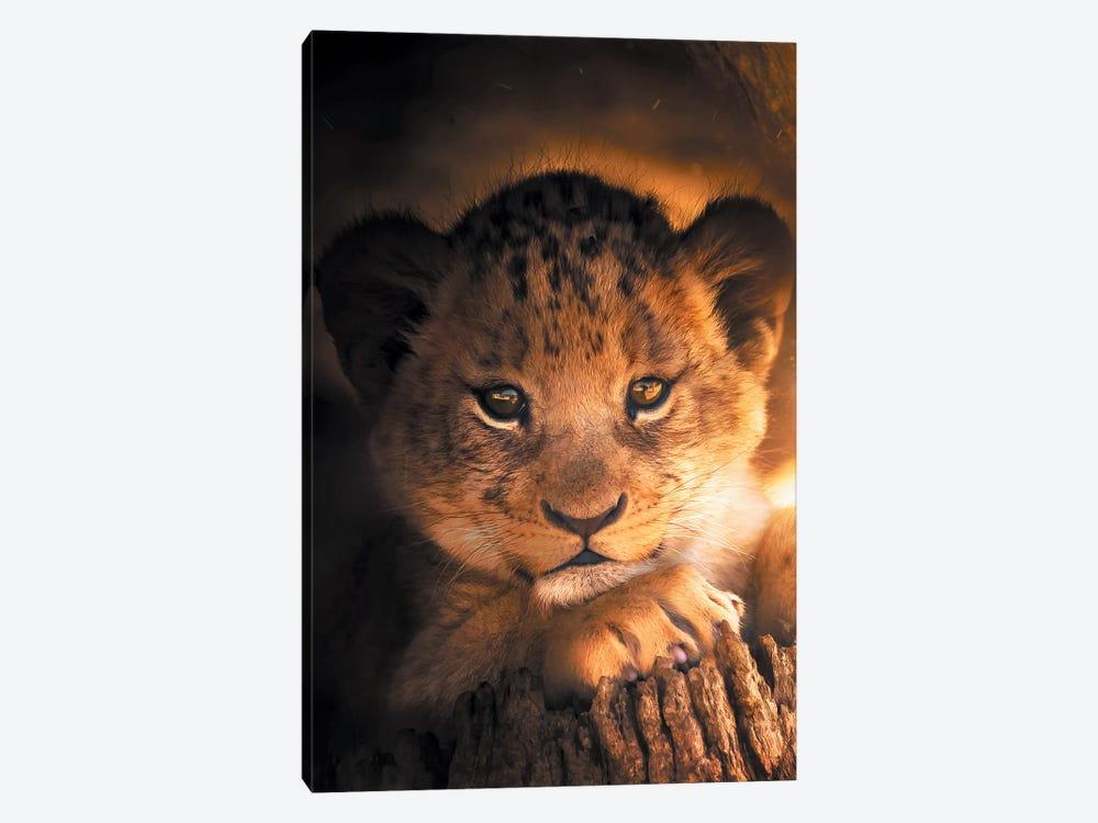 Lion Cub by Zenja Gammer 1-piece Canvas Art