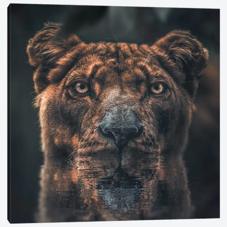 Lioness Reflection Canvas Print #ZGA36} by Zenja Gammer Canvas Wall Art