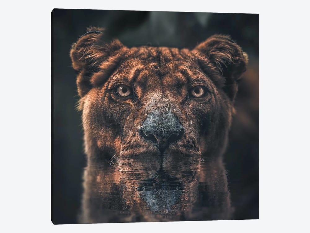 Lioness Reflection by Zenja Gammer 1-piece Canvas Art