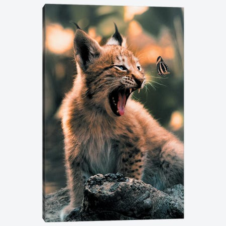 Lynx Cub Butterfly Canvas Print #ZGA40} by Zenja Gammer Canvas Wall Art