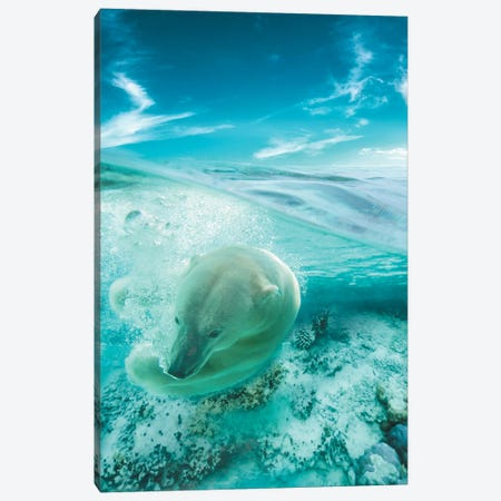 Polar Bear Swimming Canvas Print #ZGA44} by Zenja Gammer Art Print