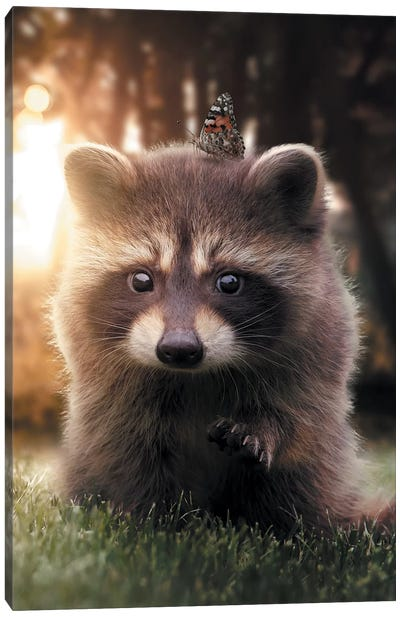 Raccoon Butterfly Canvas Art Print