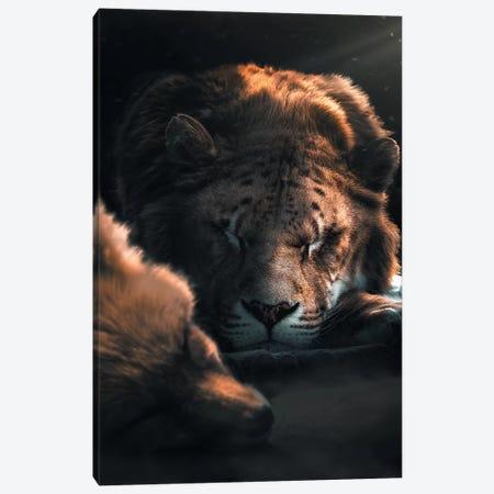 Sleeping Fox Lion Canvas Print #ZGA47} by Zenja Gammer Art Print