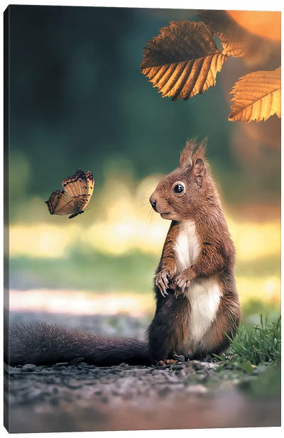 Squirrel Butterfly Canvas Art Print