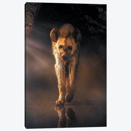 The Lonely Hyena Canvas Print #ZGA63} by Zenja Gammer Canvas Artwork