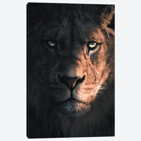Lion Portrait Canvas Print #ZGA64} by Zenja Gammer Canvas Print