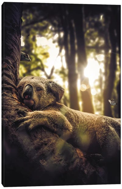 Sleeping Koala Canvas Art Print