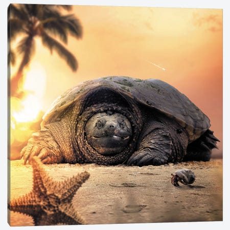 Tortoise Canvas Print #ZGA78} by Zenja Gammer Canvas Print