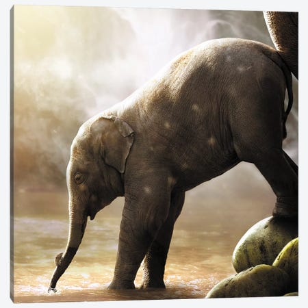 Baby Elephant Canvas Print #ZGA81} by Zenja Gammer Canvas Artwork