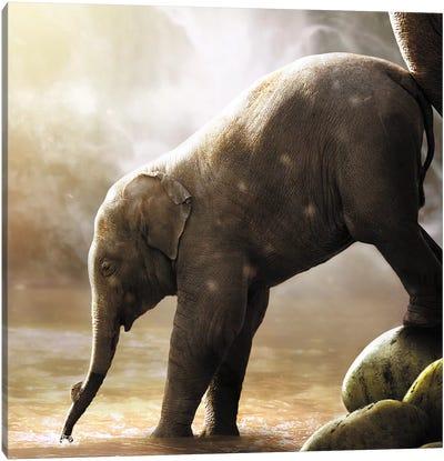 Baby Elephant Canvas Art Print