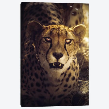 The Cheetah Canvas Print #ZGA88} by Zenja Gammer Canvas Art