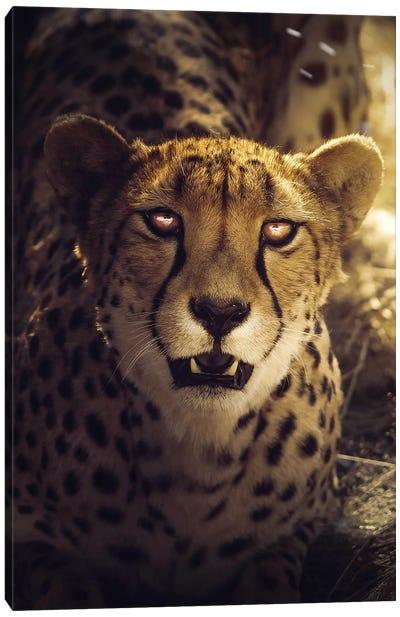The Cheetah Canvas Art Print