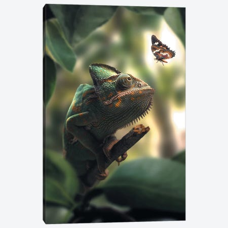 Chameleon Butterfly Canvas Print #ZGA8} by Zenja Gammer Canvas Artwork