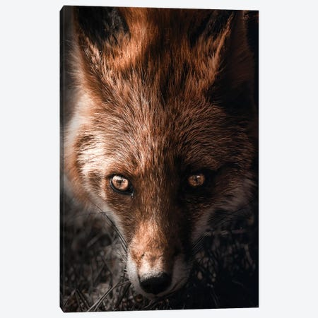 The Golden Fox Canvas Print #ZGA96} by Zenja Gammer Canvas Artwork