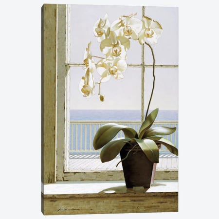 Flower In Window Canvas Print #ZHL34} by Zhen-Huan Lu Canvas Art Print