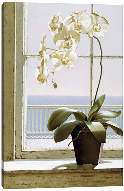 Flower In Window Canvas Art Print