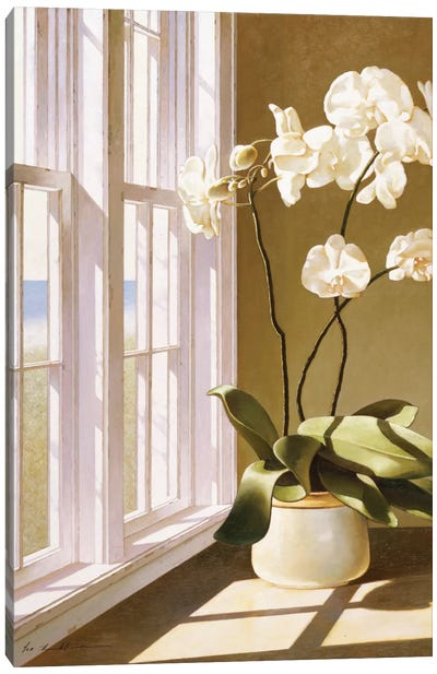 Pot Of Orchids Canvas Art Print