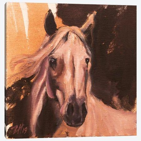 Equine Head Arab White (Study 3) 2019 Canvas Print #ZHO111} by Zil Hoque Canvas Print