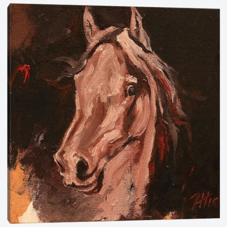 Equine Head Arab White (study 19) Canvas Print #ZHO122} by Zil Hoque Canvas Artwork