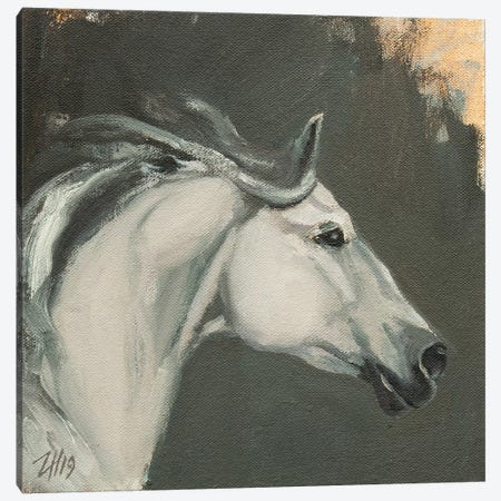 Family Equidae (study 13) Canvas Print #ZHO133} by Zil Hoque Art Print