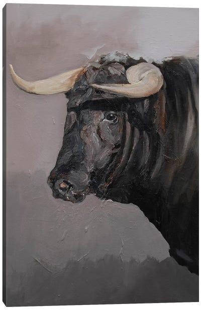 Toro Espanol Negro II Canvas Art Print