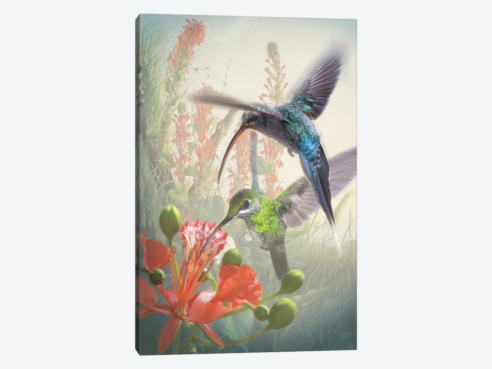 Hummingbird Cycle I by Steve Hunziker 1-piece Canvas Art