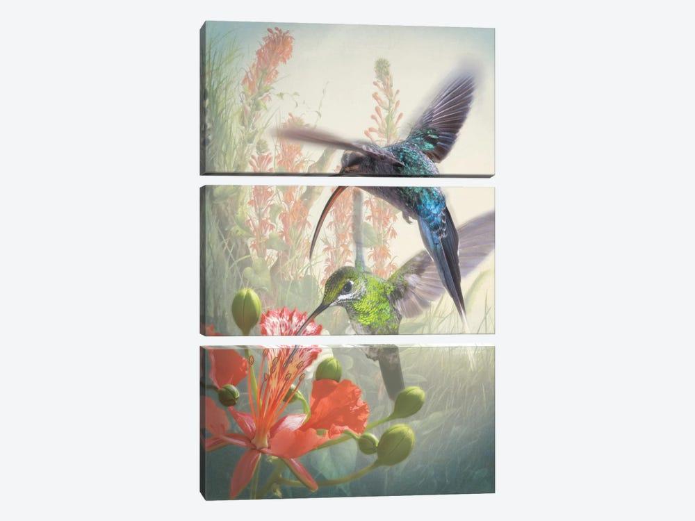 Hummingbird Cycle I by Steve Hunziker 3-piece Canvas Artwork