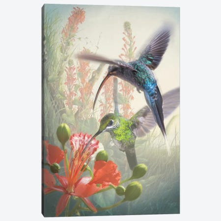 Hummingbird Cycle I Canvas Print #ZIK1} by Steve Hunziker Canvas Art
