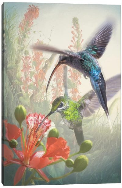 Hummingbird Cycle I Canvas Art Print