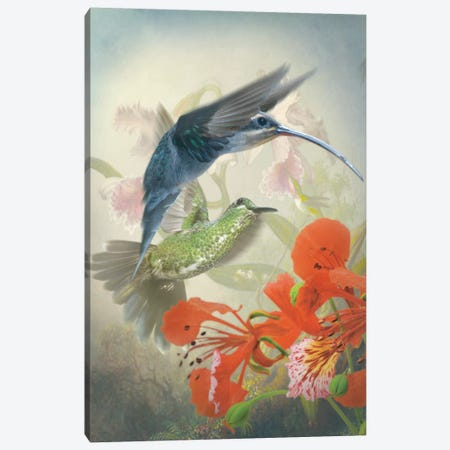 Hummingbird Cycle II Canvas Print #ZIK2} by Steve Hunziker Canvas Wall Art